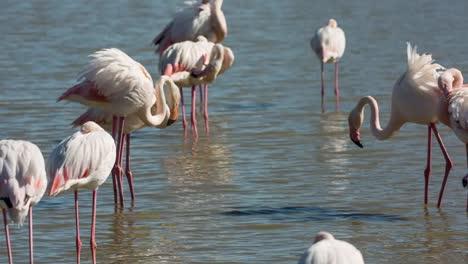 Carmargue-Flamingos-02