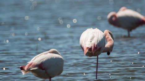 Carmargue-Flamingos-24