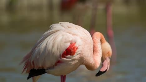Carmargue-Flamingos-25