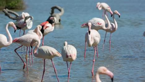 Carmargue-Flamingos-28