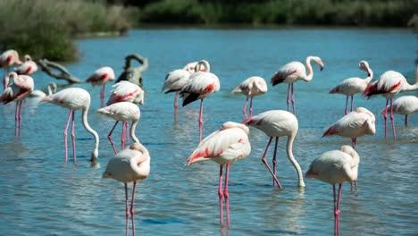 Carmargue-Flamingos-42