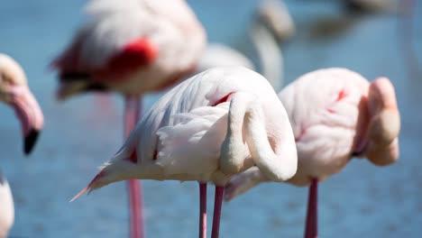 Carmargue-Flamingos-43