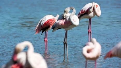 Carmargue-Flamingos-44