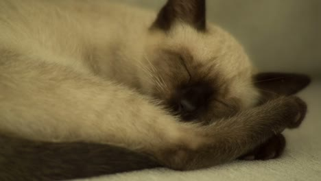 Cat-02