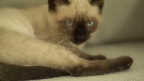 Cat-03
