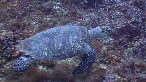 Cozumel-Turtle-00