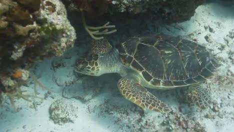 Cozumel-Turtle-02
