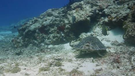 Cozumel-Turtle-05