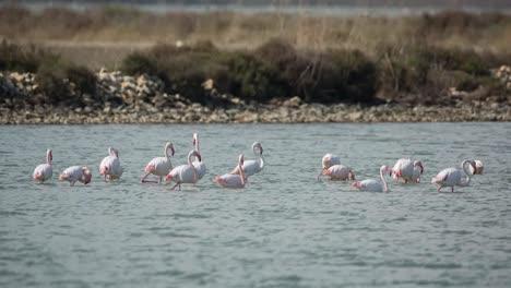 Delta-Flamingos-00