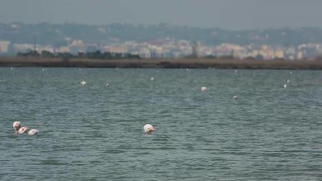 Delta-Flamingos-01