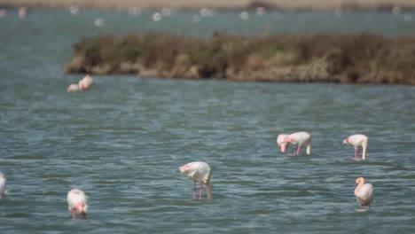 Delta-Flamingos-02
