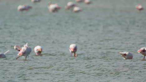 Delta-Flamingos-04