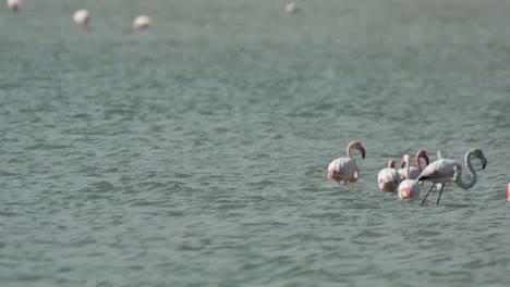 Delta-Flamingos-05