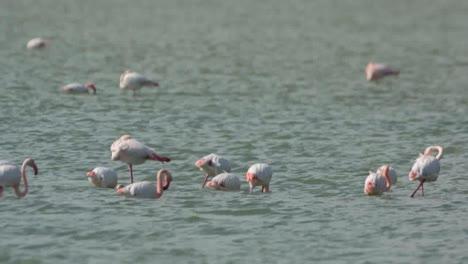 Delta-Flamingos-06