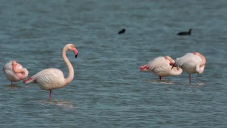 Delta-Flamingos-07