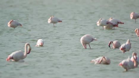 Delta-Flamingos-08