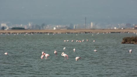 Delta-Flamingos-09