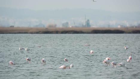 Delta-Flamingos-10