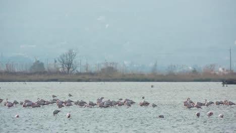 Delta-Flamingos-11