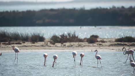 Delta-Flamingos-12