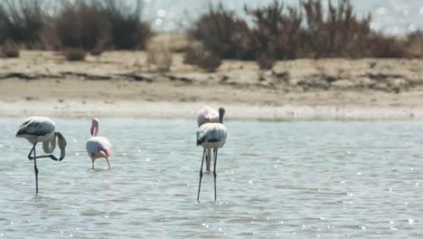 Delta-Flamingos-13