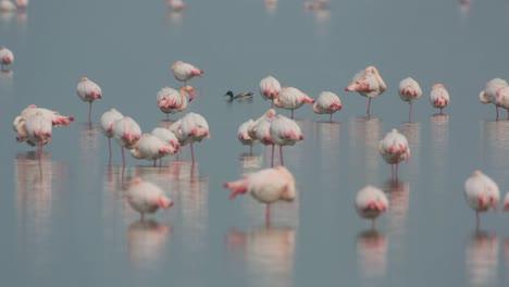 Delta-Flamingos-14