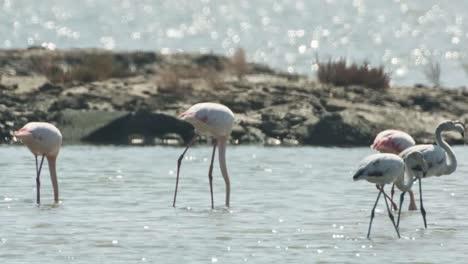 Delta-Flamingos-15