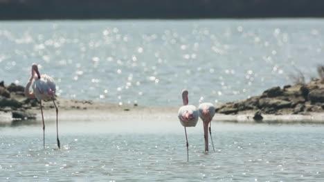 Delta-Flamingos-16