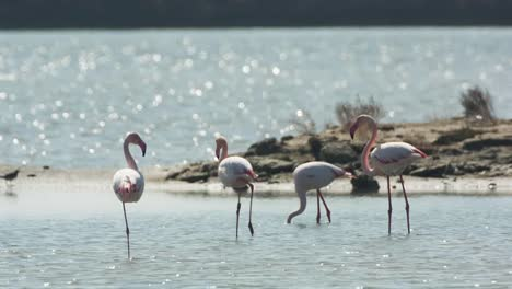 Delta-Flamingos-17