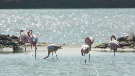 Delta-Flamingos-18