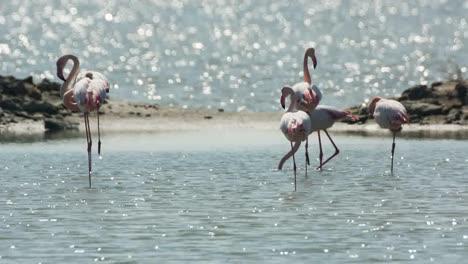 Delta-Flamingos-19