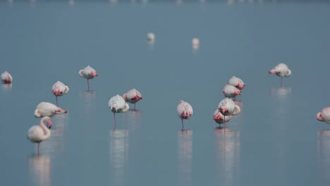 Delta-Flamingos-20