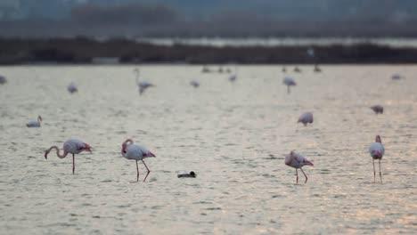 Delta-Flamingos-21