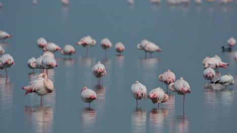 Delta-Flamingos-22