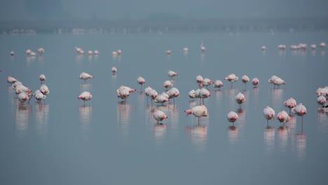 Delta-Flamingos-23