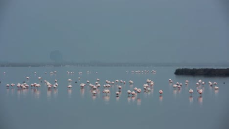 Delta-Flamingos-24