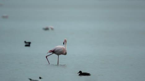 Delta-Flamingos-25