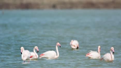Delta-Flamingos-26
