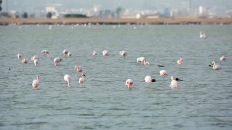 Delta-Flamingos-27