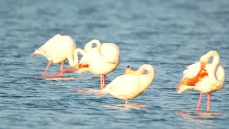 Delta-Flamingos-29