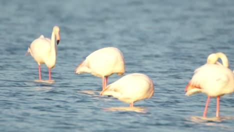 Delta-Flamingos-30