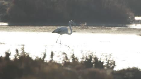 Delta-Flamingos-31
