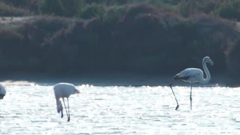 Delta-Flamingos-32