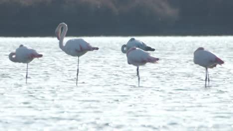 Delta-Flamingos-33