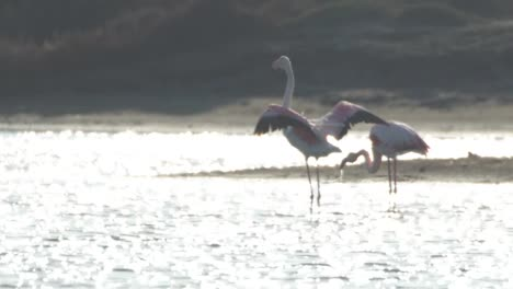 Delta-Flamingos-34