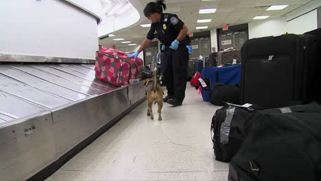 Homeland-Security-Uses-Canine-Sniffer-Dogs-To-Look-For-Drugs-At-An-American-Airport