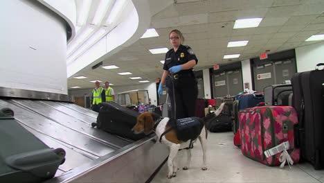 Seguridad-Nacional-Utiliza-Perros-Rastreadores-Caninos-Para-Buscar-Drogas-En-Un-Aeropuerto-Estadounidense-1