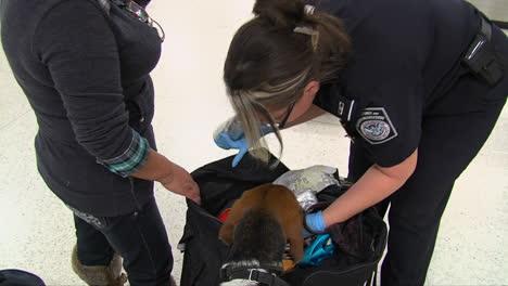 Perros-Rastreadores-De-Seguridad-Nacional-Descubren-Un-Animal-Muerto-En-El-Equipaje-De-Una-Mujer