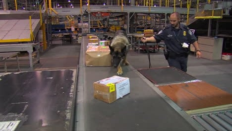 Homeland-Security-Uses-Canine-Sniffer-Dogs-To-Check-Packages-At-A-Shipping-Facility