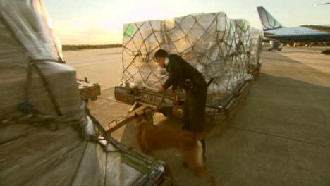 Agents-From-Us-Customs-Use-Trained-Sniffer-Dogs-To-Search-For-Illegally-Imported-Products-Amongst-Cargo-Being-Unloaded-From-An-International-Airline-Flight